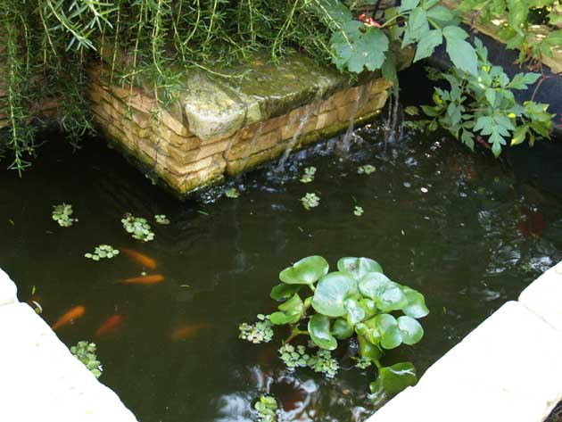 Fotos en infojardin agua para los peces del estanque for Peces y estanques